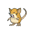 Female Raticate
