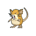 Male Raticate