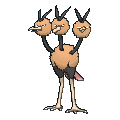 Male Dodrio