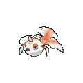 Male Goldeen