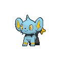 Male Shinx