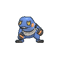 Male Croagunk