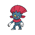 Female Weavile